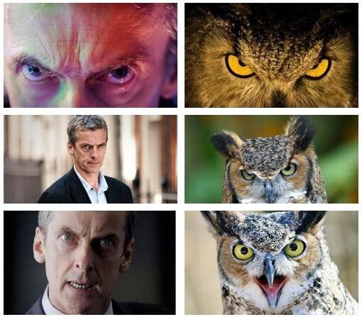 capaldi owl