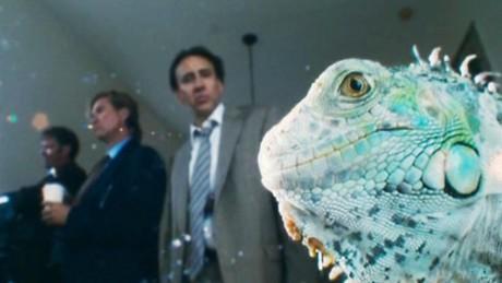 Cage photobombing an iguana